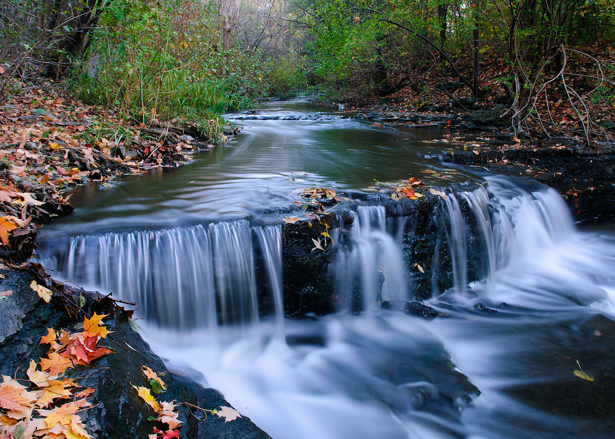 ruisseau de montigny nature park montreal